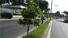 Pregopontocom Tudo: Manaus  é antepenúltima capital em arborização Sustentabilidade  Por que Manaus precisa de mais árvores? Capital é antepenúltima em arborização. - Dados sobre a arborização da capital do Amazonas são tema de estudo publicado esse ano por pesquisadores do Amazonas.Em Manaus, de acordo com dados do Instituto Brasileiro de Geografia e Estatística (IBGE), apenas 25,1% dos espaços públicos tem arborização urbana...