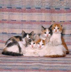 little kittehs