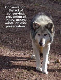 Conservation: the act of conserving; prevention of injury, decay, waste of loss; preservation. Visit us at wolfeducation.org