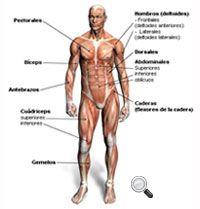 Buscador de ejercicios de fitnes por músculos