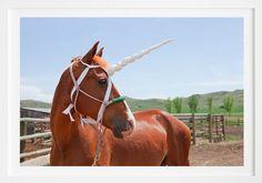 Virgin Land, Wyoming (Blue Eyes) by Millee Tibbs Eye Details, Amazon Art, Wyoming, Animal Photography, Blue Eyes, Original Artwork, Digital Prints, Whimsical, Sculptures