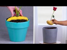 12 Indoor Gardening Hacks That Make You Throw Your Hands up and Sprout! 12 Indoor Gardening Hacks That Make You Throw Your Hands up and Sprout!,GarDony Related Excellent Ideas To Display Living Room. Gardening For Beginners, Gardening Hacks, Gardening Zones, Organic Gardening, Indoor Gardening, Vintage Gardening, Vegetable Gardening, Outdoor Gardens, Sprouting Seeds