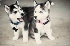 I'm gonna own both of them one day