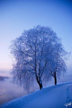 Blue mood ... by Timo Vehkaoja