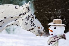 Joy is Sharing Carrots with your Friends by Laura Palazzolo, via 500px