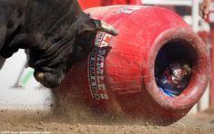 Rodeo clown Flint Rasmussen hides from a bull. Calgary Stampede