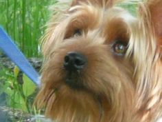 rufus - www.Cute-A-Rater.com - Vote for the cutest pet today!