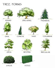 Google Image Result for http://www.winterhill.com.au/images/tree-forms.jpg