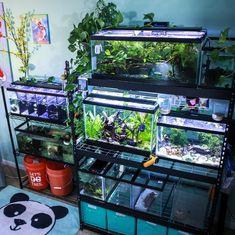 Divided tanks are a hazard and cause undue stress, which can lead to illness and… – Pets' Loyalty Betta Aquarium, Home Aquarium, Aquarium Design, Planted Aquarium, Aquascaping, Aquariums, Axolotl Tank, Betta Fish Tank, Fish Tanks