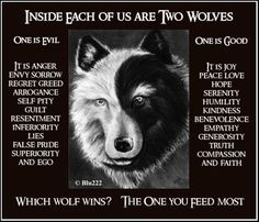 The two wolves !