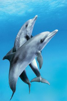 Dolphins, so intelligent, so cute!
