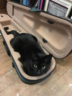 My cat thinks hes a violin. Whenever my case is open he climbs in!it) submitted by SamSammynella to /r/cats 9 comments original - - Cute Kittens - LOL Memes - in Clothes - Kitty Breeds - Sweet Animal Pictures Pretty Cats, Beautiful Cats, Animals Beautiful, Animals And Pets, Funny Animals, Cute Animals, Sleepy Animals, Animals Images, Baby Animals