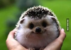 If you're having a bad day, here's Hedgehog smiling, saying everything will be alright.