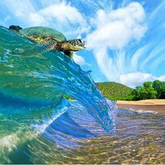 A Passport Affair  I love sea turtles