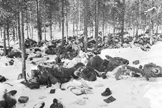 Dozens of Russian war dead in Finland during the Winter War