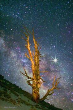 ~~Eastern Sierra - 4000 Year old Ancient Bristlecone Tree - Milky Way - Jupiter from Eastern Sierra by Wally Pacholka~~ by julekinz Make Pictures, Taking Pictures, Cool Photos, Take Better Photos, How To Take Photos, Types Of Photography, Famous Photography, Night Photography, To Infinity And Beyond