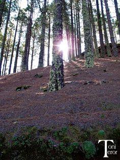 Rayos de sol entre los troncos