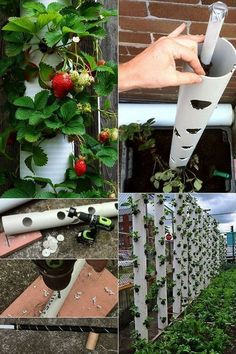 Erdbeeren pflanzen in DIY Containers – so geht's! creative craft idea with pvc pipes for diy contain Plant Strawberries in DIY Containers - Here& how! Planting strawberries in small spaces Verticle Garden, Veg Garden, Vegetable Garden Design, Fruit Garden, Garden Plants, Outdoor Plants, Hydroponic Gardening, Hydroponics, Gardening Tips