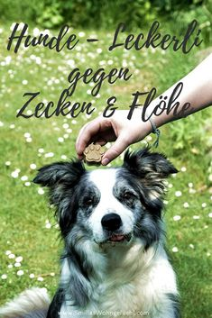 natural remedies for ticks and fleas in dogs - Smilla's feeling of wellbeing - Gesundes Hundefutter - Quick chicken recipes Pet Puppy, Pet Dogs, Dogs And Puppies, Dog Cat, Pet Health, Ticks, Dog Accessories, Fleas, Animal Photography
