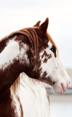 #horseriding #horserider #equine This paint horse appears to be wearing his soft winter coat.
