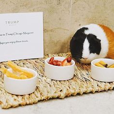 Margret has a full day planned while staying at @TrumpChicago - visiting Michigan Mile, relaxing in the spa and making time for a decadent meal. We're so grateful she stopped for a moment to enjoy an afternoon snack and photo op with us. #TrumpPets   Instagram photo by: @carolinealt Trump International Hotel, Day Plan, Afternoon Snacks, Make Time, Grateful, Michigan, Spa, Chicago, In This Moment