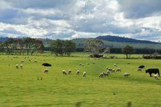 Tasmania. Beautiful one day... a Devil the next. Beautiful One, Tasmania, One Day, The Next, Golf, Devil, Australia, Wave