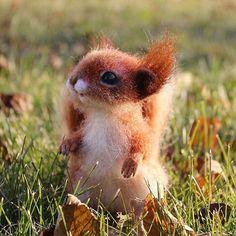 Яркая осенняя малышка. Дом нашла. Sold. #feltingwool #squirrel #белочка #бельчонок #animals #сухоеваляние Wet Felting, Needle Felting, Felt Animals, Photo And Video, Cute, Squirrels, Felting, Figurine, Kawaii