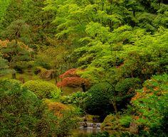Japanese Gardens Waterfalls   Bing Images | Waterfalls | Pinterest | Garden  Waterfall And Gardens
