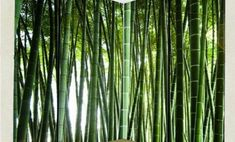 Charming Natural Green Bamboo Forest Pattern Waterproof Bathroom Wall Murals 73 For Your Small Home Decoration Ideas for Natural Green Bamboo Forest Pattern Waterproof Bathroom Wall Murals Bamboo Trellis, Bamboo Garden, Bamboo Plants, Shade Garden, Clumping Bamboo, Wall Art Wallpaper, Replant, Growing Seeds, Home Pictures