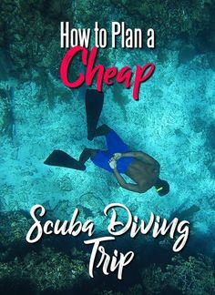 Planning a cheap scuba diving trip can seem impossible at first, but with a little bit of planning and a few smart switches, you can be under the sea in no time (and no money! Travel Guides, Travel Tips, Travel Destinations, Travel Photos, Travel Europe, Travel Hacks, Romantic Destinations, Travel Packing, Romantic Travel