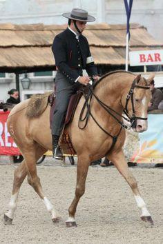 Breed: Azteca Horse