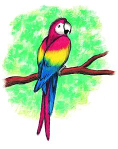 26 Best Parrots Images Parrots Parakeets Parrot Drawing