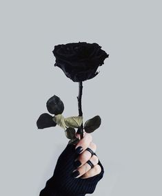 Even see a black rose. Nah, I'm used to butterflies Black Aesthetic Wallpaper, Aesthetic Iphone Wallpaper, Aesthetic Wallpapers, Rose Wallpaper, Galaxy Wallpaper, Wallpaper Backgrounds, Black And White Aesthetic, Black Love, Black Style