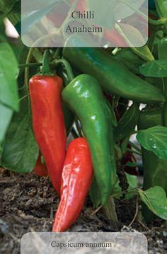 anaheim-chili