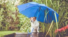 Happy Saturday! What's everyone doing?? It's a rainy day here! My favorite kind of day! #eyeglassdotcom #rainyday #2020 #sunglasses #roundeyeglasses #xxleyeglasses #wesellhardtofindframes #saturday Fun Indoor Activities, Dog Activities, Baby Animals Pictures, Dog Pictures, Ugly Animals, Spring Is Here, Jack Russell Terrier, Go Outside, Rainy Days