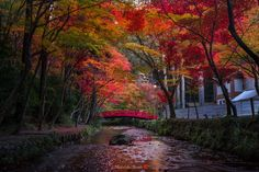 Fall of Japan - A beautiful season in Japan. The seasons of spring and autumn are the most beautiful seasons of Japan. Kyoto in autumn is famous, but everywhere in Japan is wrapped in beautiful colors.