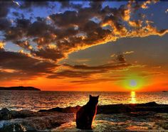 Even this cat takes the time to appreciate a beautiful sunset
