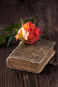 Orange rose with old book Premium Photo Book Flowers, Flowers Nature, Red Flowers, Beautiful Flowers Wallpapers, Pretty Wallpapers, Flower Girl Photos, Rose Flower Wallpaper, Tea And Books, Book Wallpaper
