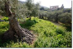 Permaculture in Palestine – a Green Revolution