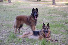 Isabeau & Bambie