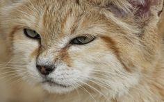 cat-imagine