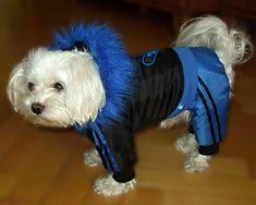 ZIMNÝ OVERAL BLUE XS / Zboží prodejce riky-dogwear   Fler.cz