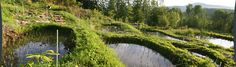Whole Systems Research Design in Vermont: Ben Falk, rice paddies, on SW facing steeper slope (like us)