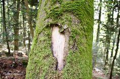 Mossy Tree in the mountains near Luzern