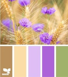"""color field"""