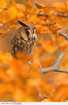 Owl #cuudulieutransang | cuu du lieu tran sang, cứu dữ liệu trần sang, cong ty cuu du lieu tran sang, công ty cứu dữ liệu trần sang | http://cuudulieutransang.wix.com/trangchu