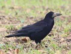 """Résultat de recherche d'images pour """"animaux noirs"""""""