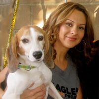 Beagle Freedom Project began in December 2010 when Shannon Keith received information that beagles who were used for animal experiments in a research lab were to be given a chance at freedom. Our mission is rescuing and finding homes for beagles used in laboratory research.