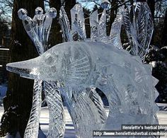 Ice sculptures: the pics | Henriette's Herbal Homepage