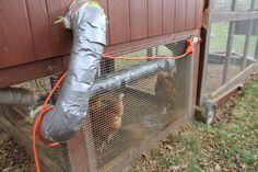 Suburban Chicken Coop: Preventing Freezing & Preparing For the Winter ~ Simple Suburban Living